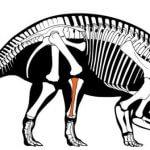 Палеонтологи впервые идентифицировали рак в окаменелости динозавра