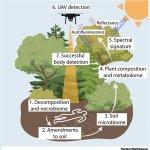 Как изменения растительного покрова разоблачают места расположения трупов