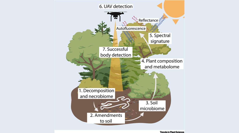изменение в составе растений