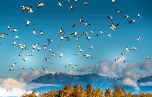 птицы стая