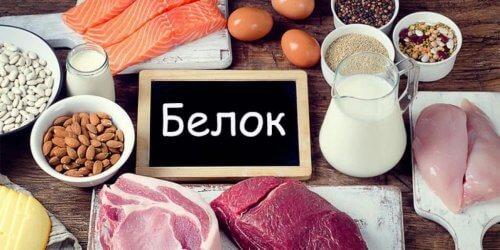 пища белок