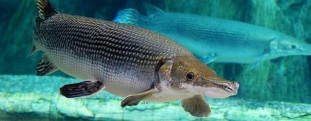 рыба древняя