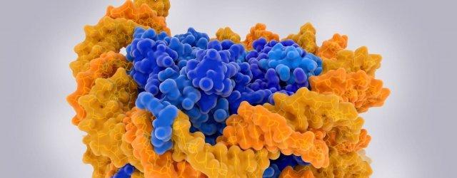 DNK Стресс в раннем возрасте оказывает долгосрочное воздействие через эпигеном