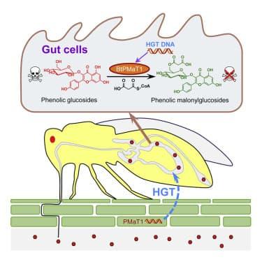 ген перенос горизонтальный