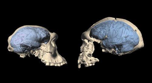 мозг древние