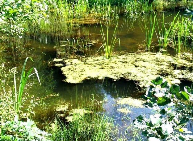болотно водные угодья