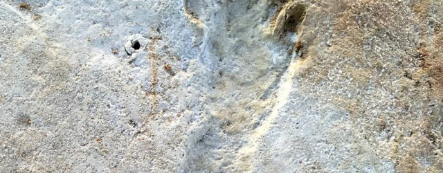 окаменелые следы