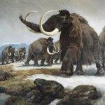 Ученые намерены возродить мамонта, который вымер около 10000 лет назад